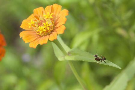 サツマヒメカマキリ幼虫IMG_4897.jpg