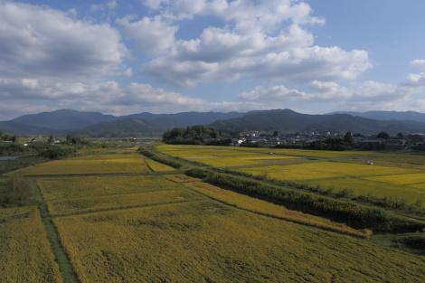 三股町田園IMG_7561.JPG