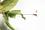 イチモンジチョウ幼虫巣2.jpg