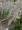 キアゲハ蛹PB100025.jpg