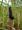 ツマグロヒョウモン前蛹PB130062.jpg