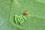 アオモンツノカメ卵IMG_1799.JPG