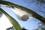 ジョロウグモ卵のうIMG_1877.JPG