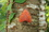 リンゴカレハIMG_9696.JPG