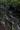 金山林道IMG_6615.JPG