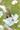 ナガサキアゲハIMG_2498.JPG